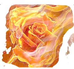 firery_rose